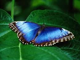 free butterfly photo