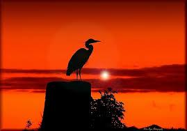 heron artwork