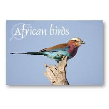 pictures of african birds