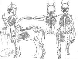 anatomy of skeleton