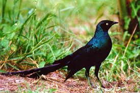 african birds pictures