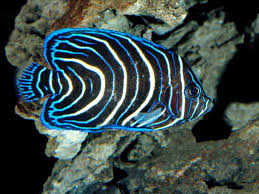 animals in the coral reefs