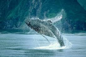 ocean creature pictures