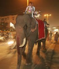 elephants of india