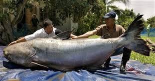 freshwater catfishing