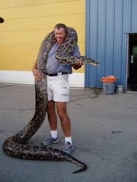 big corn snakes