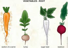 roots vegetables