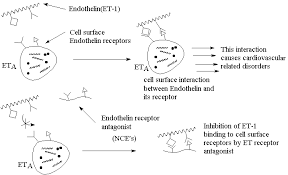 endothelin receptor