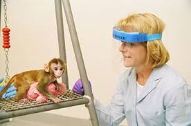 baby rhesus monkey