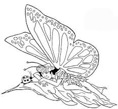 fairies coloring books