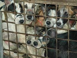 animal welfare dogs