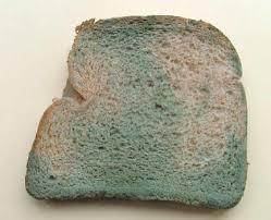 mold growth on bread