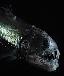 deep sea photography