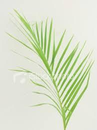 palm leaf image