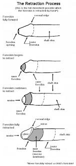 anatomical diagrams