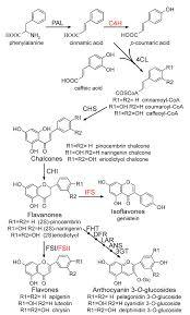 flavonoid biosynthesis
