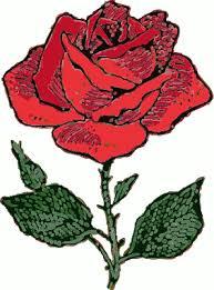 نقاشی رنگی از گل رز