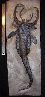 extinct bugs