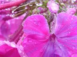 pink screensavers