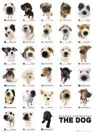 collection the dog