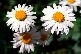 kind of flowers
