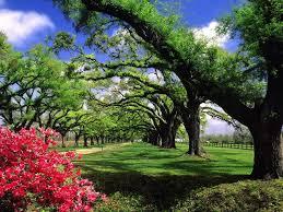 Harika Ağaçlar