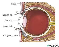 anatomy of eyes