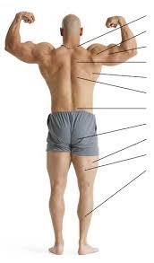 exercises back