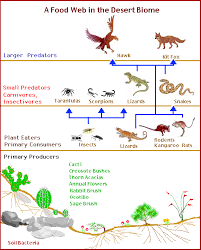 desert food web diagram