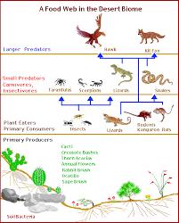 desert animals food chain