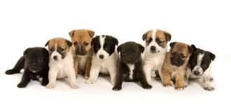 mix breed puppy
