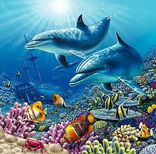dolphin under the sea