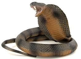 cobra snake picture