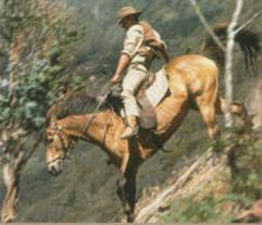 man from snowy river film