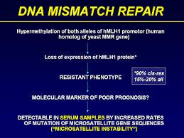 dna mismatch repair