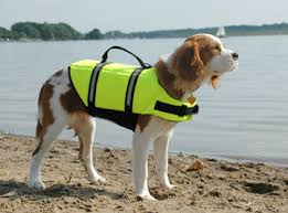 lifejackets for dogs
