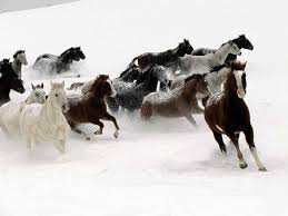 horses in the snow pictures