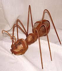 yard ant