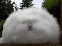 cotton ball rabbit