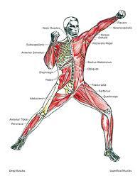 martial arts body