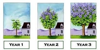 growing trees