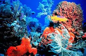 coral reef pic