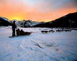 dog sledding pictures