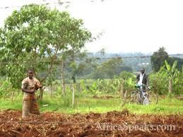 kenya agriculture
