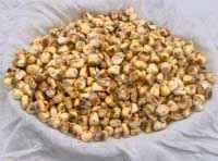 maiz cancha