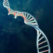 free dna pictures