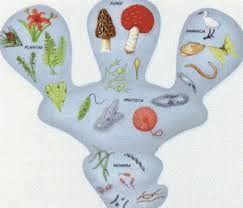 seres pluricelulares