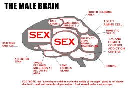 maps of the brain