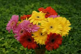 kinds of flowers in the philippines