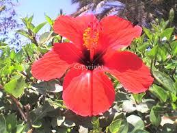 belle fleure